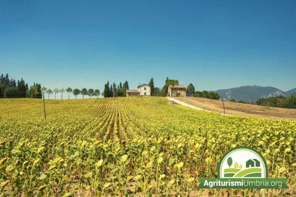 Vacanza in un agriturismo in Umbria