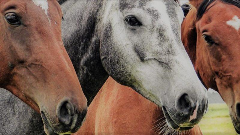 equitazione in agriturismo in Umbria