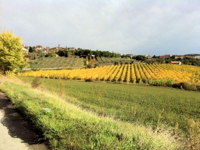 Italia-in-bicicletta-umbria-autunno-vigneti-bikeinumbria-1-1071x800 _low70
