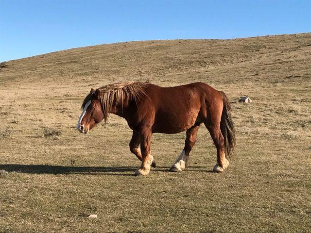 monte-subasio-cavallo-1067x800 _low70